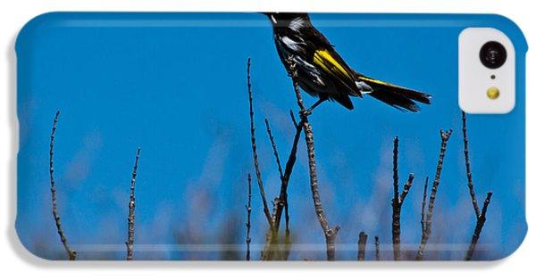IPhone 5c Case featuring the photograph New Holland Honeyeater by Miroslava Jurcik