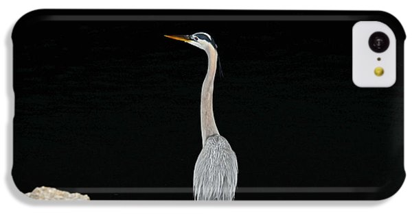Night Of The Blue Heron 2 IPhone 5c Case by Anthony Baatz