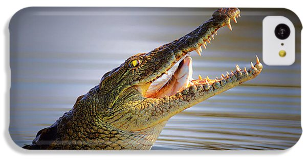 Nile Crocodile Swollowing Fish IPhone 5c Case by Johan Swanepoel