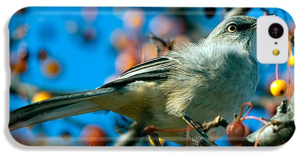Mockingbird iPhone 5c Case - Northern Mockingbird by Bob Orsillo
