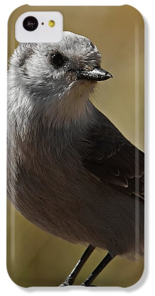 Northern Mockingbird IPhone 5c Case by Ernie Echols