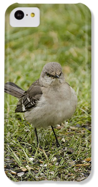 Northern Mockingbird IPhone 5c Case by Heather Applegate
