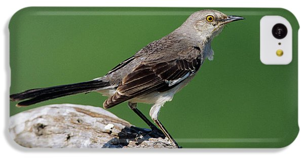 Mockingbird iPhone 5c Case - Northern Mockingbird (mimus Polyglottos by Richard and Susan Day