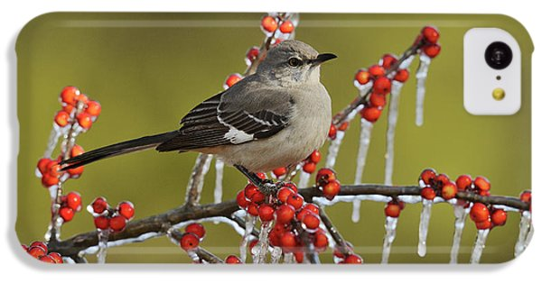 Mockingbird iPhone 5c Case - Northern Mockingbird (mimus Polyglottos by Rolf Nussbaumer