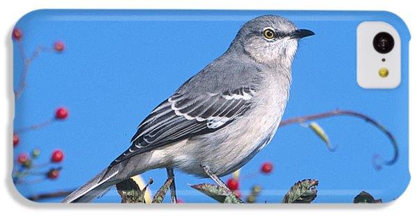 Northern Mockingbird IPhone 5c Case by Paul J. Fusco