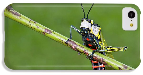 Grasshopper iPhone 5c Case - Northern Spotted Grasshopper by K Jayaram