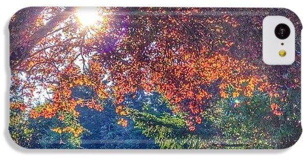 Sunny iPhone 5c Case - Oak Street Early Evening Light by Anna Porter