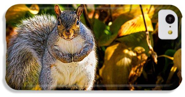 One Gray Squirrel IPhone 5c Case by Bob Orsillo