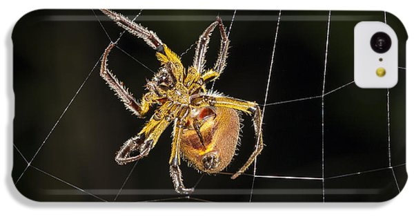 Orb-weaver Spider In Web Panguana IPhone 5c Case by Konrad Wothe