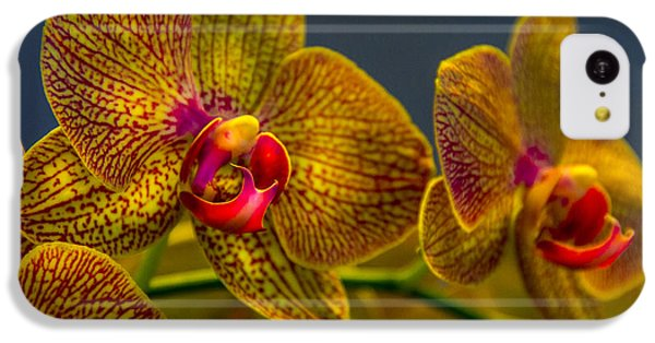 Orchid iPhone 5c Case - Orchid Color by Marvin Spates