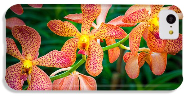 Orchids IPhone 5c Case by Inge Johnsson