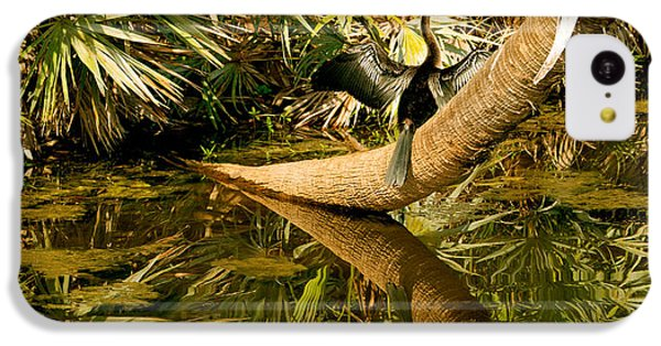 Anhinga iPhone 5c Case - Oriental Darter Anhinga Melanogaster by Panoramic Images