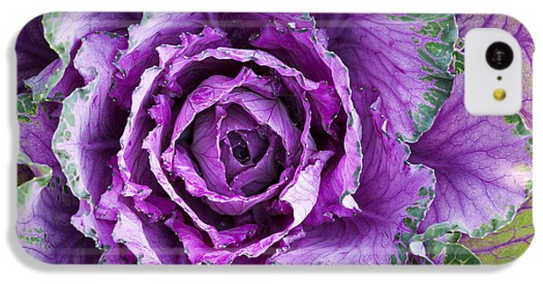 Ornamental Cabbage IPhone 5c Case by Tim Gainey