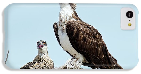 Osprey And Chick IPhone 5c Case by Bob Gibbons