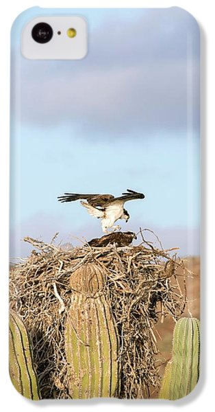 Ospreys Nesting In A Cactus IPhone 5c Case by Christopher Swann