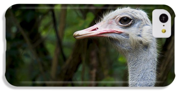 Ostrich Head IPhone 5c Case by Aged Pixel