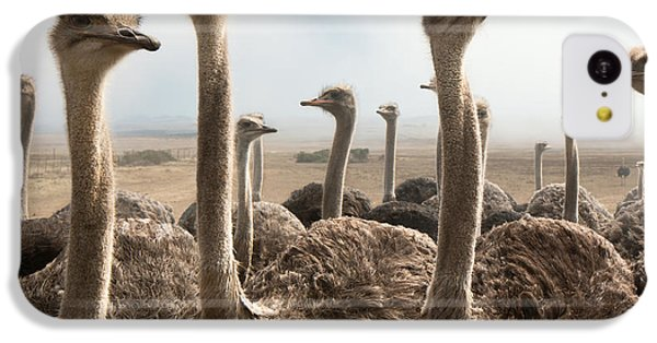 Ostrich Heads IPhone 5c Case by Johan Swanepoel