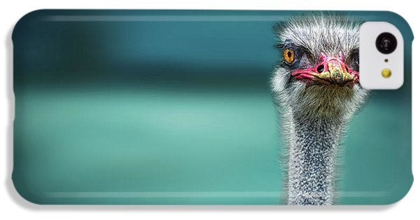 Ostrich iPhone 5c Case - Ostrich Protecting Two Poor Chicken From The Wind by Piet Flour