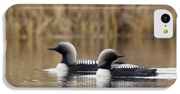 Loon iPhone 5c Case - Pacific Loon Pair by Ken Archer