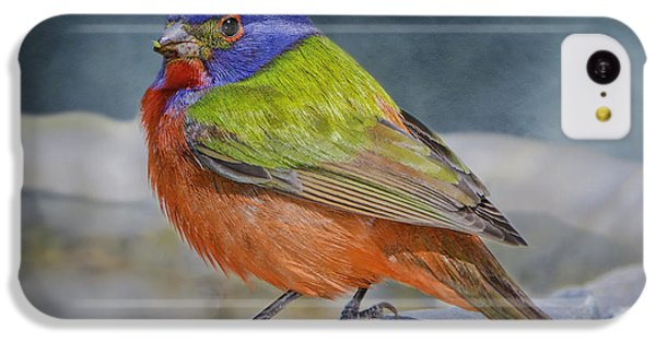 Painted Bunting In April IPhone 5c Case by Bonnie Barry