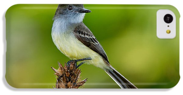 Pale-edged Flycatcher IPhone 5c Case