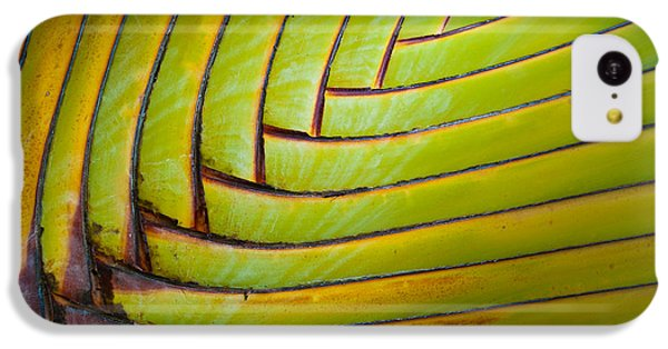 Palm Tree Leafs IPhone 5c Case
