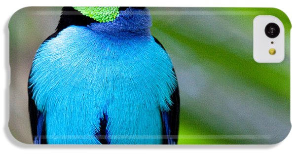 Paradise Tanager IPhone 5c Case
