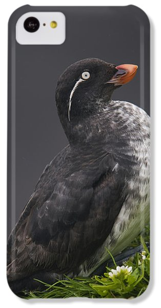 Parakeet Auklet Sitting In Green IPhone 5c Case by Milo Burcham