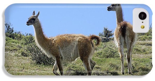 Patagonian Guanacos IPhone 5c Case by Michele Burgess