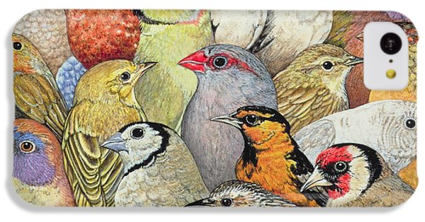 Finch iPhone 5c Case - Patchwork Birds by Ditz