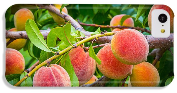 Peaches IPhone 5c Case by Inge Johnsson