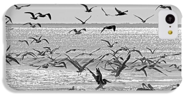Pelican Chaos IPhone 5c Case by Betsy Knapp