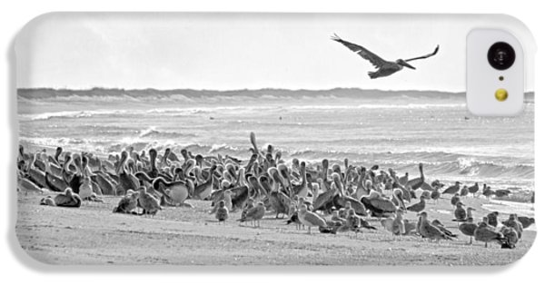 Pelican Convention  IPhone 5c Case by Betsy Knapp