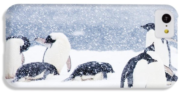 Penguins In The Snow IPhone 5c Case by Carol Walker