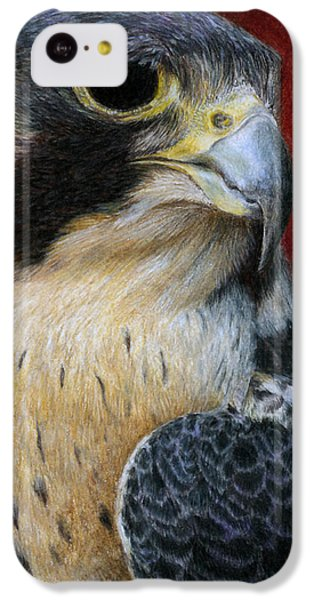 Peregrine Falcon IPhone 5c Case by Pat Erickson