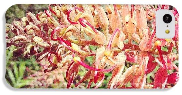 Decorative iPhone 5c Case - Australian Grevillea Flower by Sinead Connell