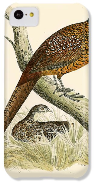 Pheasant iPhone 5c Case - Pheasant by Beverley R Morris