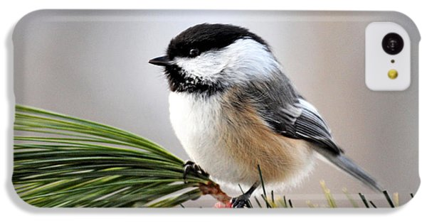 Pine Chickadee IPhone 5c Case