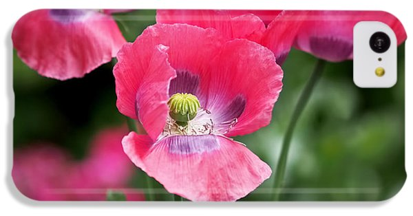 Garden iPhone 5c Case - Pink Poppies by Rona Black