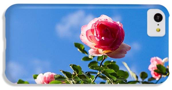Pink Roses - Featured 3 IPhone 5c Case by Alexander Senin