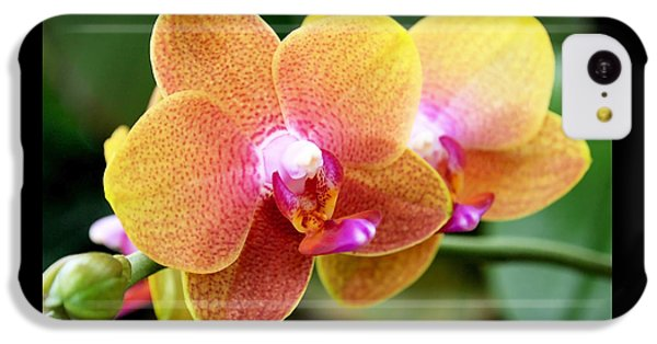 Pink Yellow Orchid IPhone 5c Case