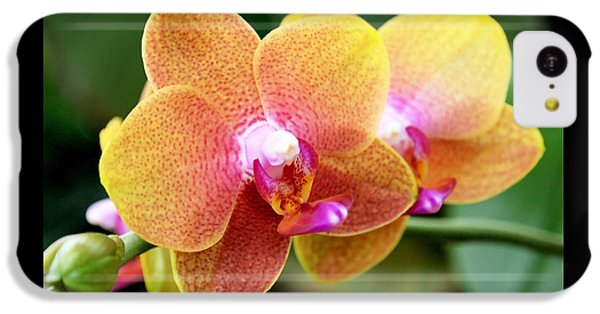Pink Yellow Orchid IPhone 5c Case by Rona Black