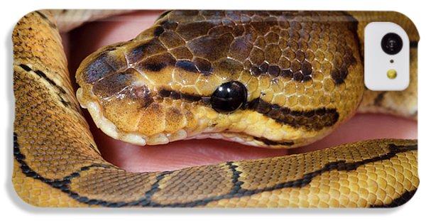 Pinstripe Royal Python IPhone 5c Case