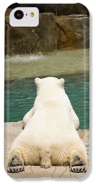 Playful Polar Bear IPhone 5c Case by Adam Romanowicz