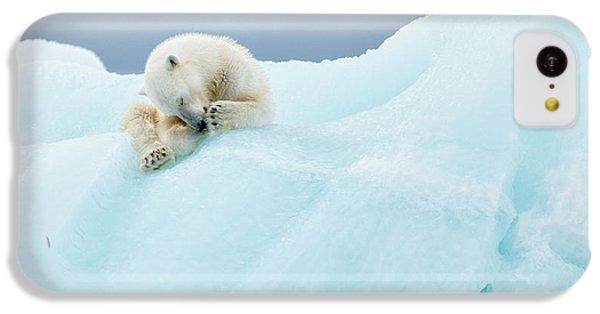 Polar Bear iPhone 5c Case - Polar Bear Grooming by Joan Gil Raga