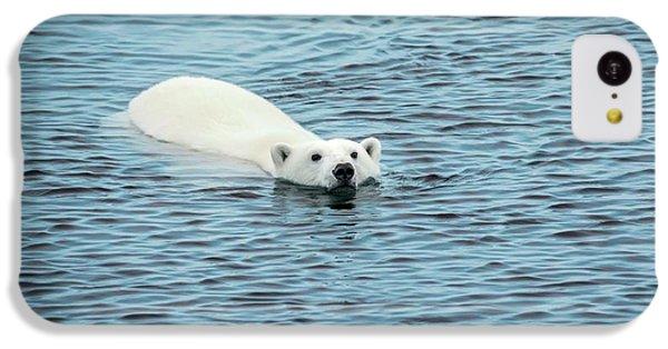 Polar Bear Swimming IPhone 5c Case by Peter J. Raymond
