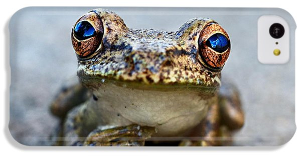 Pondering Frog IPhone 5c Case by Laura Fasulo