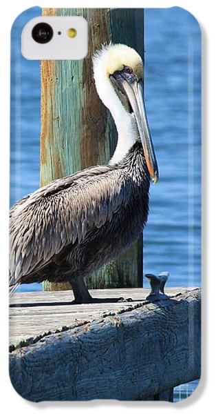 Pelican iPhone 5c Case - Posing Pelican by Carol Groenen