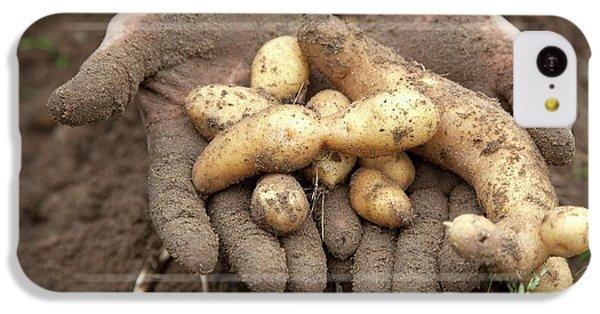 Potato Harvest IPhone 5c Case by Jim West