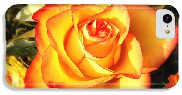 Pretty Orange Rose IPhone 5c Case